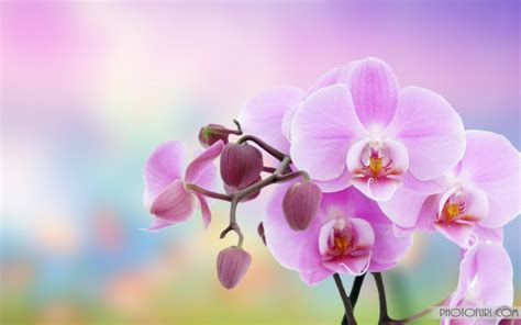 Flower Animation Wallpaper - the most beautiful and colorful flowers wallpapers for