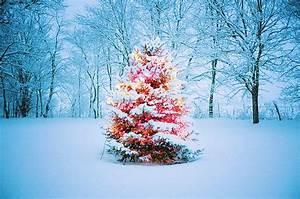 Christmas snow photography winter xmas lights light cold ...