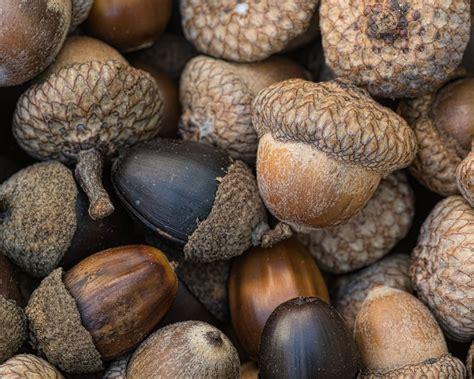 acorns  quarter  photo contest butler county