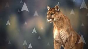 Should I Upgrade to Mountain Lion?