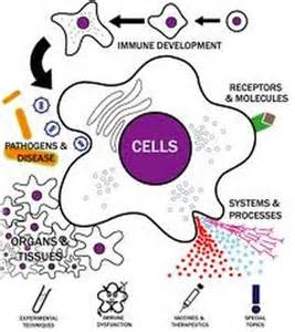 IMMUNODEFICIENCY DISORDERS - IMMUNOLOGY  AIDS and Infections Acquired Immune Deficiency Syndrome