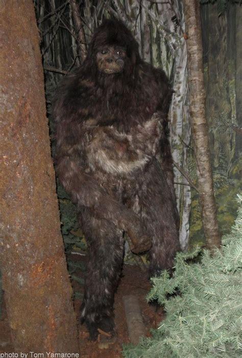 bigfoot pictures  lynne mccarthy bergeron  easy