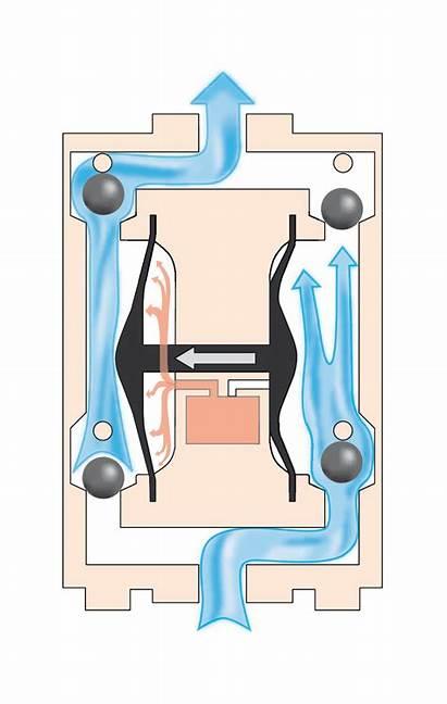 Diaphragm Pump Pumps Does Displacement Positive Principle