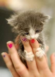 15 Really Cute Kittens   Kitty Bloger  Cutest