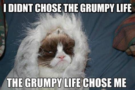 Grumpy Memes - the grumpy life grumpy cat know your meme