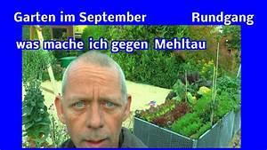 Garten Im September : garten im september was macht man gegen mehltau rundgang ~ Watch28wear.com Haus und Dekorationen