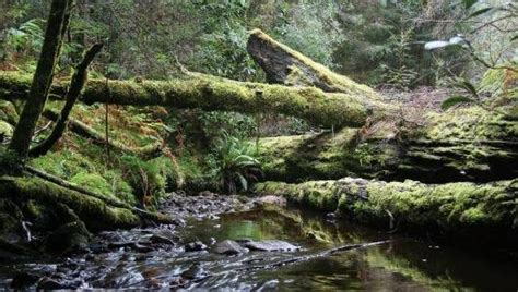 best forests in america the 8 best rain forest destinations that you haven t visited yet mnn mother nature network