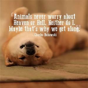 Pet Quotes QuotesGram