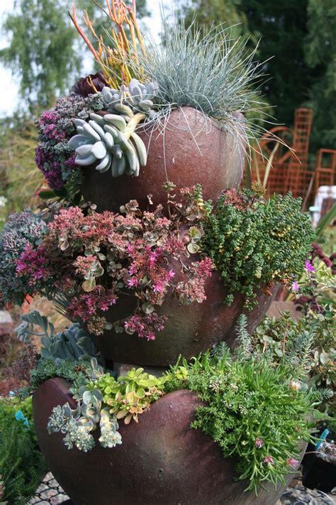 container garden succulents garden ideas