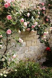 Plantes Grimpantes Mur : 25 best ideas about plante grimpante on pinterest ~ Melissatoandfro.com Idées de Décoration