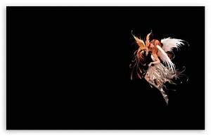 Ange Et Demon : ange et demon 4k hd desktop wallpaper for wide ultra widescreen displays dual monitor ~ Medecine-chirurgie-esthetiques.com Avis de Voitures