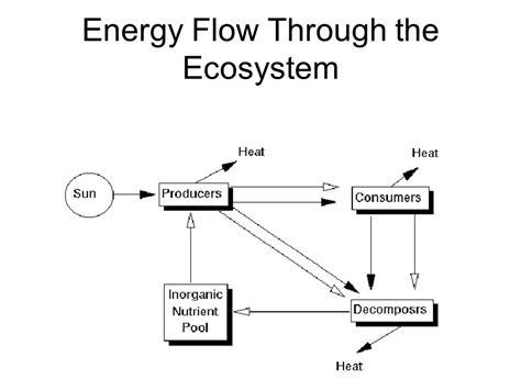 energy flow  pond ecosystem energy etfs