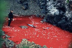 The Cove Hunt In Japan Is Back & Dolphins Are in Serious ...