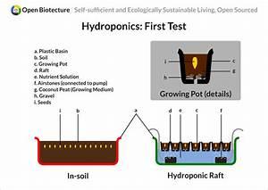 Hydroponics  First Test