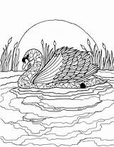 Adult Colouring Coloring Swan Craft Supplies Stencil Sheets Eckersleys sketch template