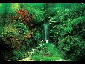 Aquarium Gestaltung Bilder : aquascaping landschaften unter wasser gestaltet fw ~ Lizthompson.info Haus und Dekorationen