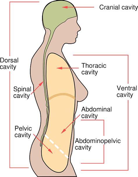 es el mesotelioma peritoneal   podemos hacer al