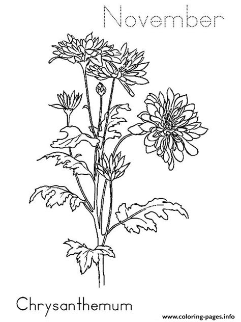 chrysanthemum november coloring pages printable