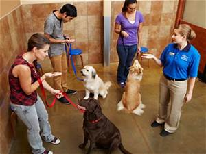 national dog training month win free training classes With dog training courses