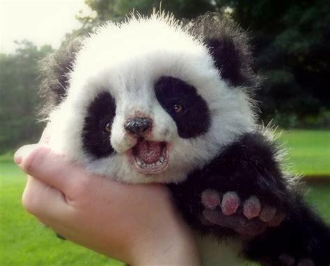 Cute panda bear cub - Wild animals wallpaper