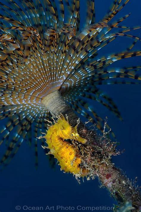 macro underwater   winners underwater