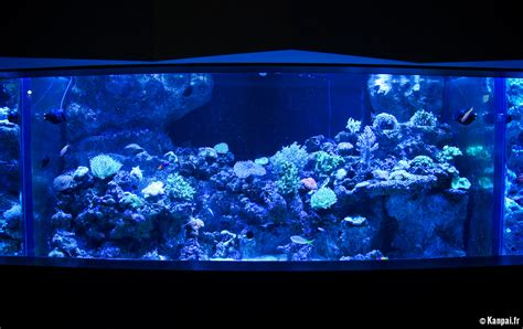 aquarium de parking 28 images rome parks rome aquarium park airbnb underwater bedroom
