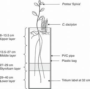 Schematic Of Pot Culture Comprising A Pvc Pipe And