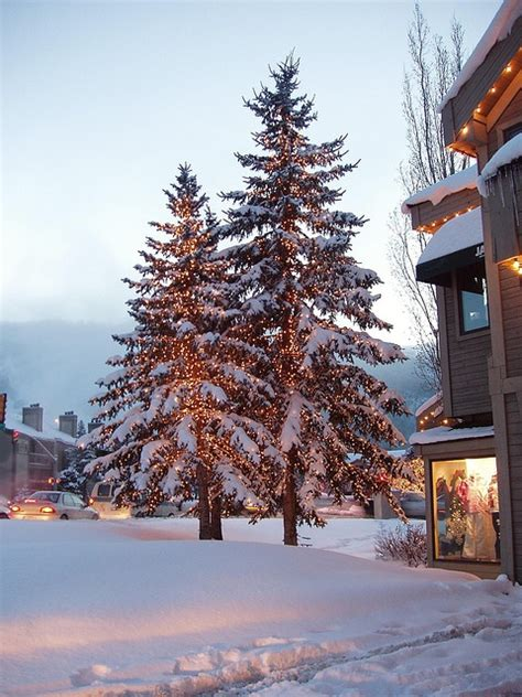 christmas trees in park city utah life pinterest