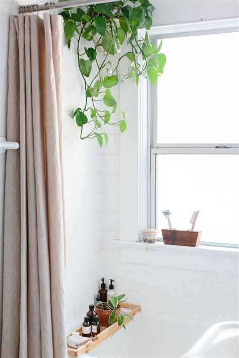 Plants For Bathrooms With No Light by 17 Best Ideas About Bathroom Plants On Indoor