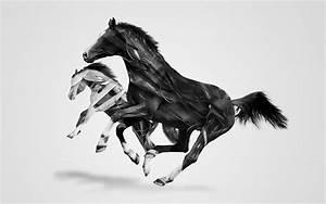 Horse 3D Image Animals Wallpaper Wallpaper | WallpaperLepi