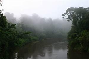 Welche Pflanze Produziert Am Meisten Sauerstoff : folgen der regenwaldzerst rung f r das klima faszination regenwald ~ Frokenaadalensverden.com Haus und Dekorationen