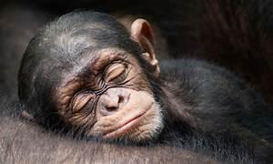25 Animales dormilones que son los más tiernos del mundo