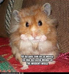 Funny Picture: Funny Animals Captions Pictures
