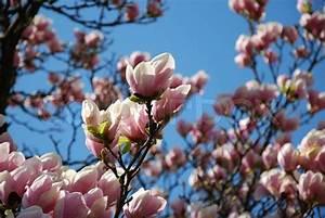 Aktuelle Blumen Im April : fr hjahr april prime blumen baum stock foto ~ Markanthonyermac.com Haus und Dekorationen