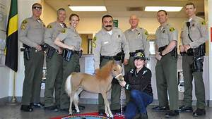 Mini Therapy Horse Joining LA County Sheriff's Department ...