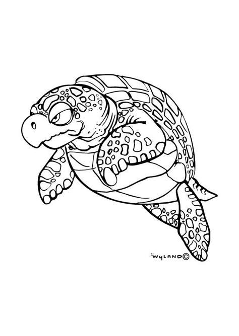 dibujo  colorear tortuga marina img