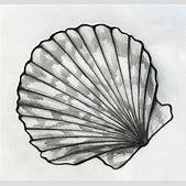 Sea shell sketc...