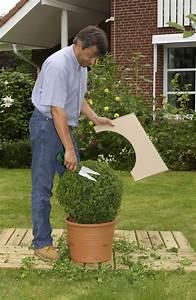 Buchsbaum Schablone Kaufen : 10 pflegetipps f r den buchsbaum mein sch ner garten ~ Watch28wear.com Haus und Dekorationen
