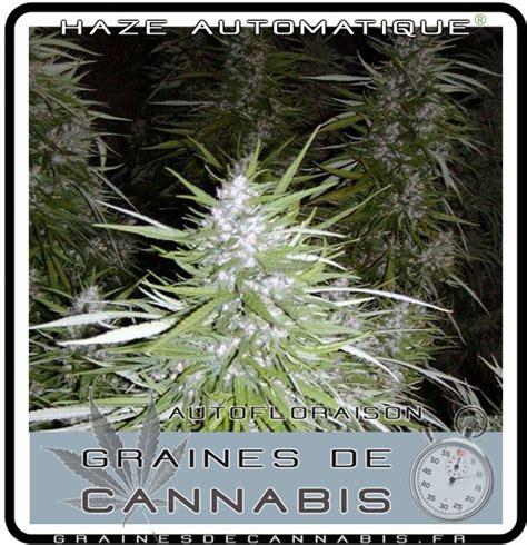 graines de cannabis autofloraison pour l int 233 rieur