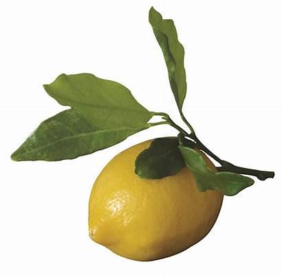 Salmon Garlic Atlantic Lemon Juice Fillets Oil