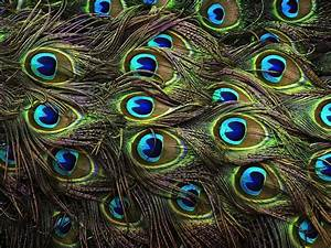 Wallpapers Of Peacock Feathers HD 2015 - Wallpaper Cave
