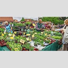 Mehr Platz Zum Bummeln Auf Dem Blumenmarkt