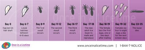 what color is lice lice lessons lice removal and treatment newport