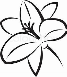 Vector monochrome illustration of lily flower | Stock ...