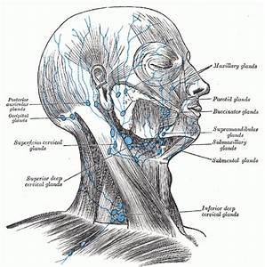 Patient Guide To Head And Neck Lymphedema