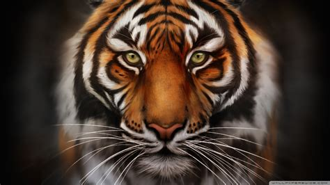 wallpaper blink tiger wallpaper hd