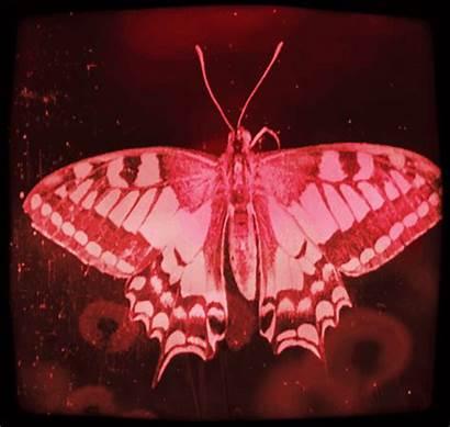 Vaporwave Aesthetic Aesthetics Butterfly Gifs Animal Redaesthetic