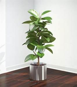 Comment Tailler Un Ficus : comment prendre soin d 39 un ficus 6 tapes ~ Melissatoandfro.com Idées de Décoration