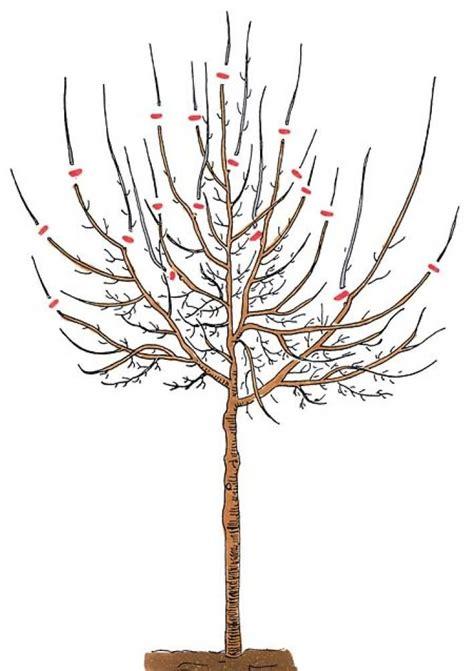 alte kirschbäume schneiden pflaumenbaum richtig schneiden bahce pflaumenbaum