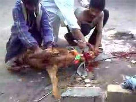 ireland somali muslim pass slitting throats goats home